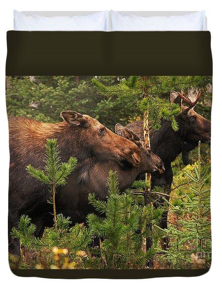 Moose Family At The Shredded Pine Duvet Cover