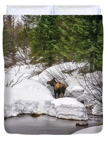 Moose In Alaska Duvet Cover