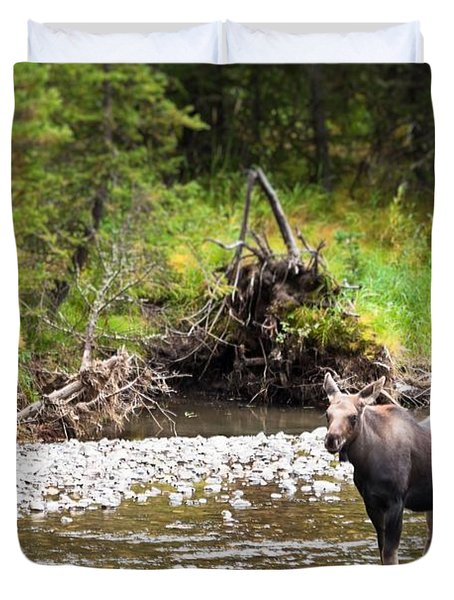 Moose In Yellowstone National Park   Duvet Cover