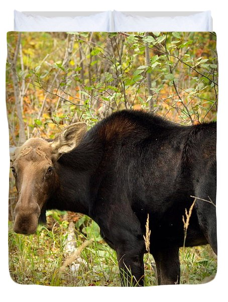 Duvet Cover featuring the photograph Moose by James Peterson