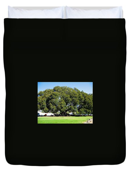 Moreton Fig Tree In Santa Barbara Duvet Cover