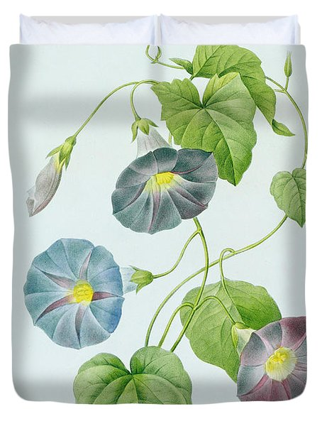 Morning Glory Duvet Cover by Pierre Joseph Redoute