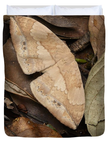 Moth Camouflaged Against Leaf Litter Duvet Cover