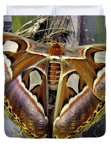 Atlas Moth Duvet Cover