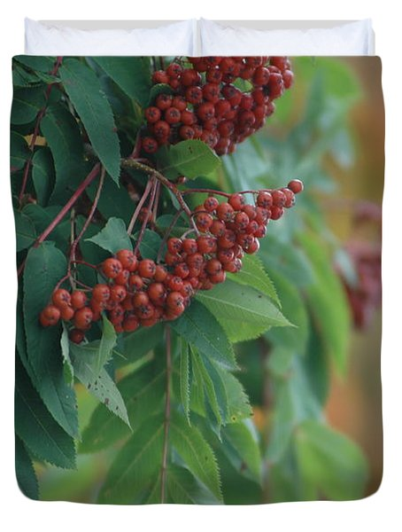 Mountain Ash With Red Berries Duvet Cover