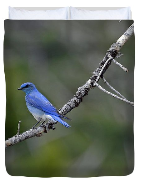 Mountain Bluebird In Yellowstone National Park Duvet Cover by Bruce Gourley