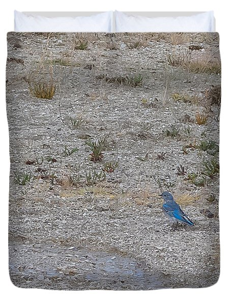 Mountain Bluebird  Duvet Cover by Lars Lentz