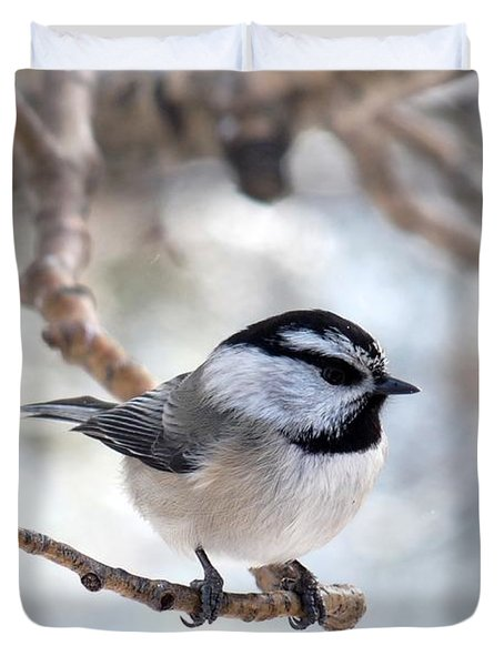 Mountain Chickadee On Branch Duvet Cover