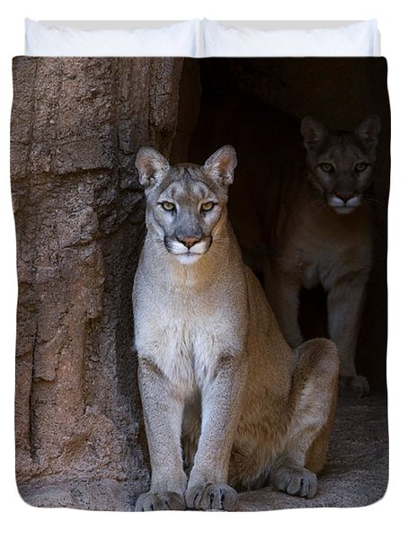 Duvet Cover featuring the photograph Mountain Lion 1 by Arterra Picture Library