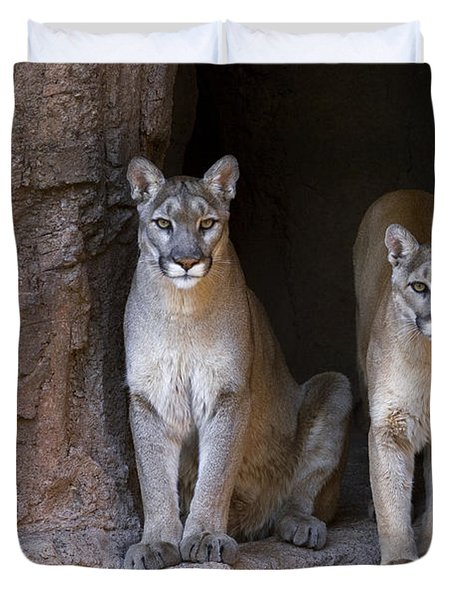Duvet Cover featuring the photograph Mountain Lion 2 by Arterra Picture Library