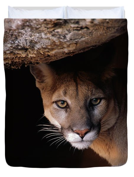 Mountain Lion Peering From Cave Duvet Cover