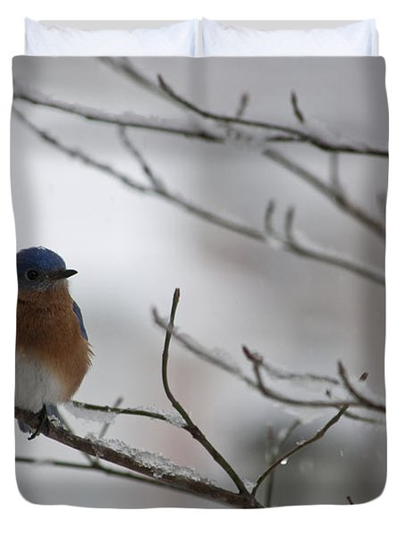 Mr Bluebird Duvet Cover by Teresa Mucha