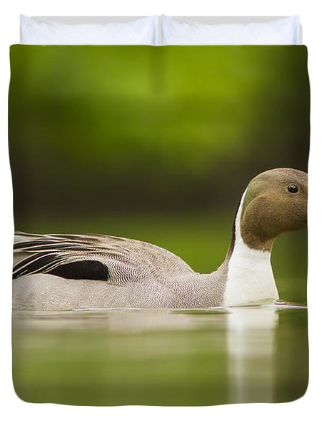 Mr Pintail  Duvet Cover by Mircea Costina Photography