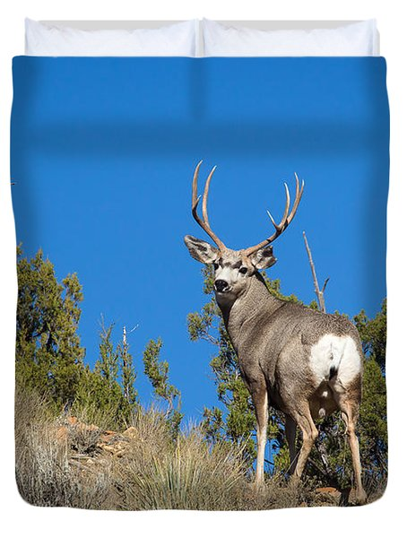 Mule Deer Buck Duvet Cover