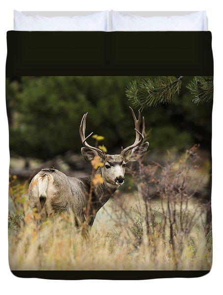 Mule Deer I Duvet Cover