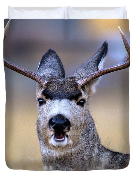 Mule Deer Odocoileus Hemionus Buck Duvet Cover