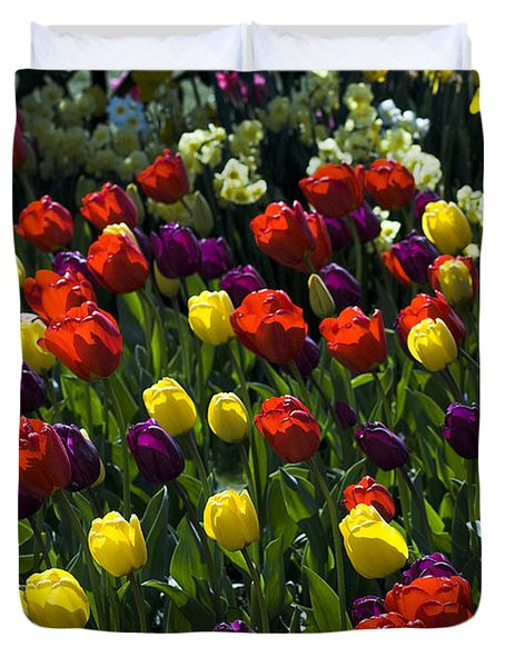 Multicolored Tulips At Tulip Festival. Duvet Cover