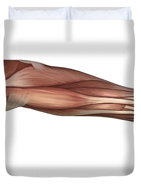 Muscle Anatomy Of The Human Arm Duvet Cover