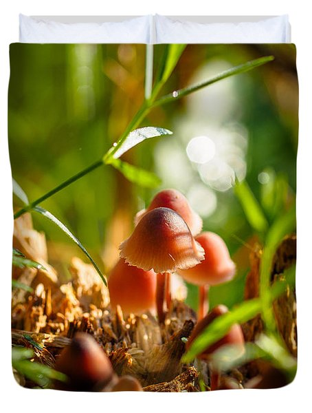Mushrooms On A Decaying Stump Duvet Cover