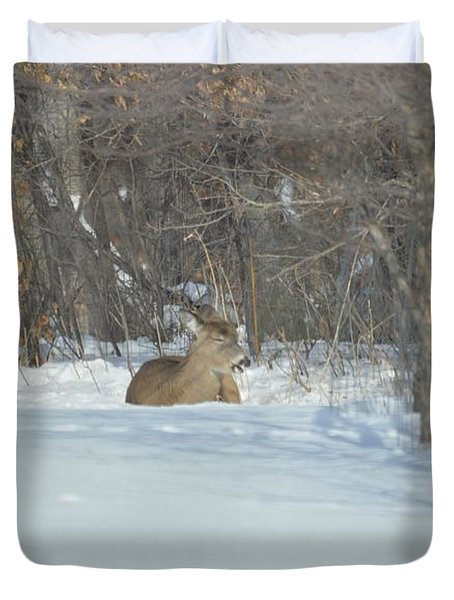 Duvet Cover featuring the photograph Nap Time by Dacia Doroff
