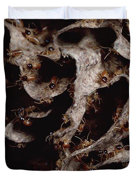 Nasute Termite Nest Amazonian Peru Duvet Cover by Mark Moffett