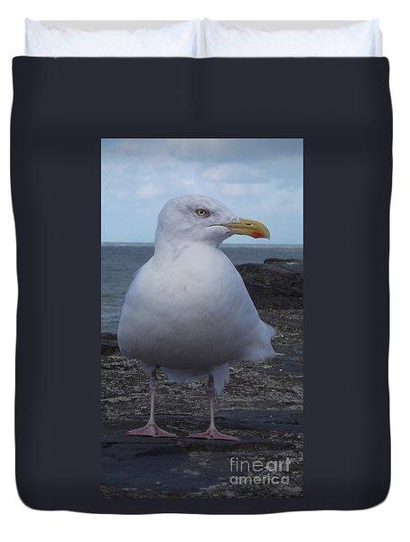 New Quay Gull  Duvet Cover