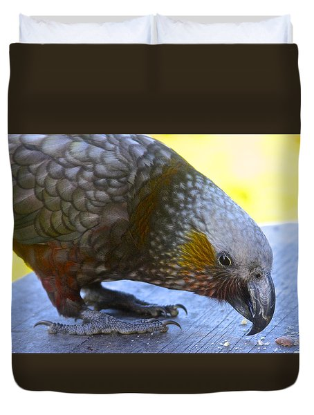 New Zealand Kaka Happy Hour Duvet Cover by Venetia Featherstone-Witty