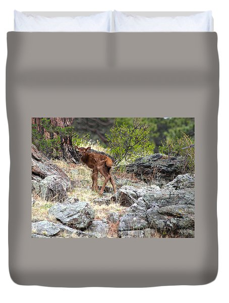 Newborn Elk Calf Duvet Cover