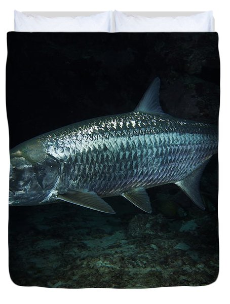 Night Tarpon Duvet Cover by Carey Chen