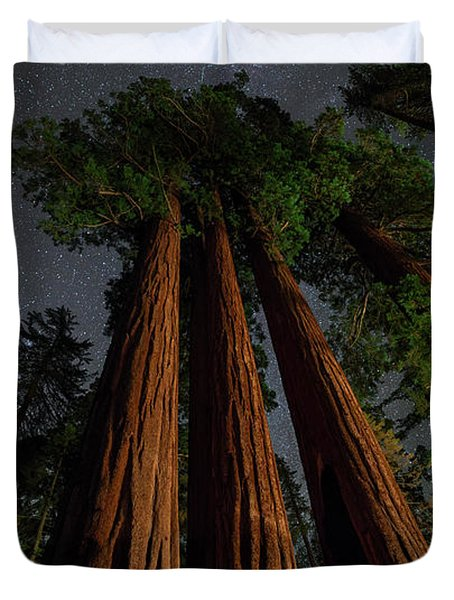 Night View Of Giant Sequoia Trees Duvet Cover