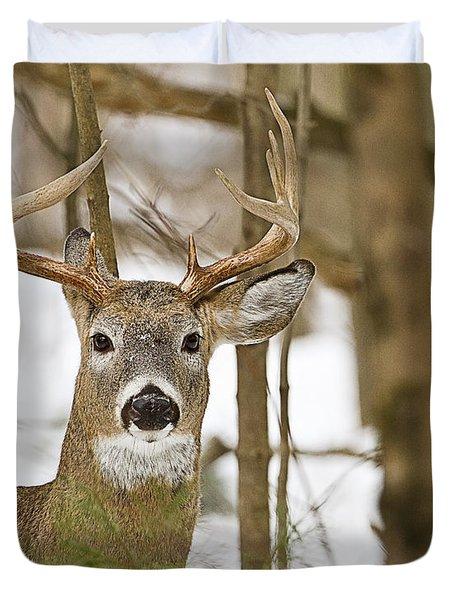 Nine Point White Tailed Buck Duvet Cover by John Vose