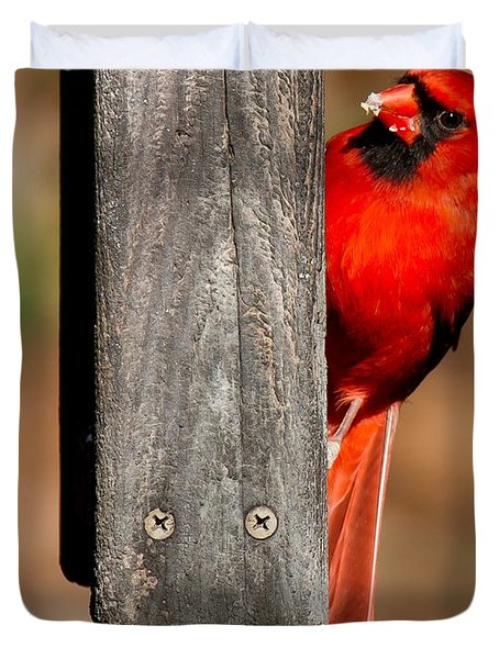 Duvet Cover featuring the photograph Northern Cardinal by Robert L Jackson