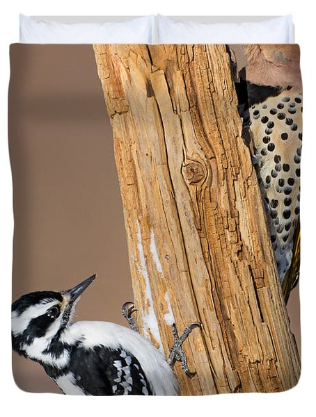 Northern Flicker And Hairy Woodpecker Duvet Cover