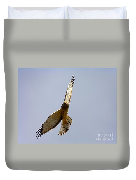 Northern Harrier Banking Duvet Cover by Mike  Dawson