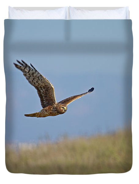 Northern Harrier In Flight Duvet Cover by Duncan Selby