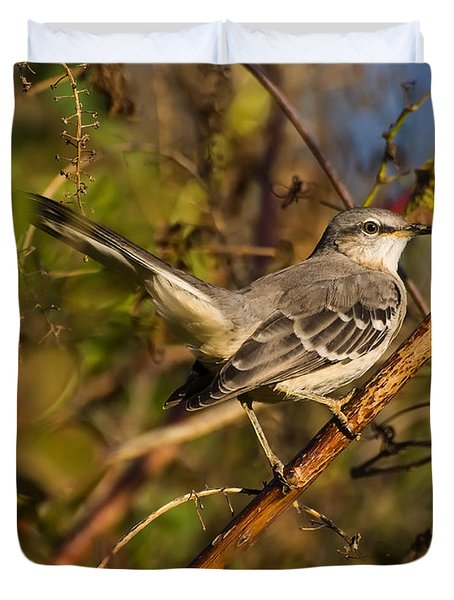 Northern Mockingbird Duvet Cover by Chris Flees