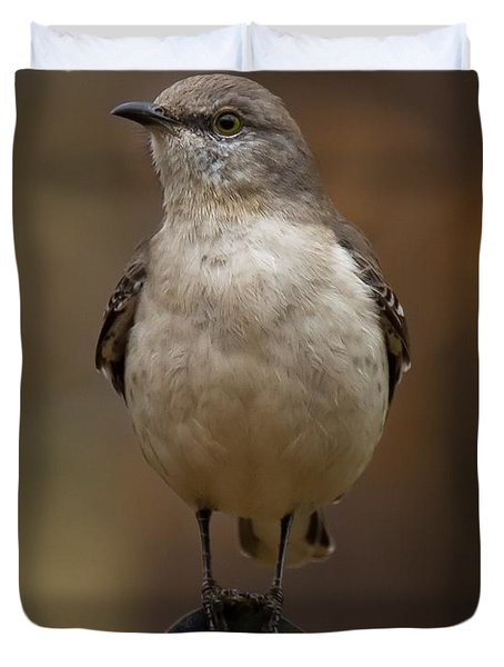 Northern Mockingbird Duvet Cover by Robert L Jackson