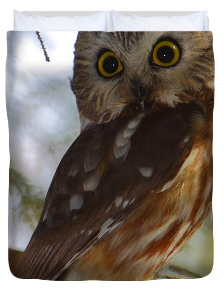 Northern Saw-whet Owl II Duvet Cover