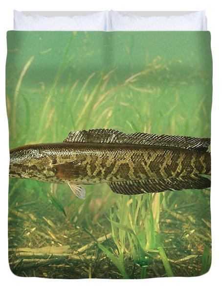 Northern Snakehead Duvet Cover