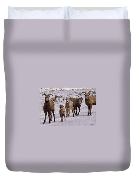 Not Too Sheepish Duvet Cover by Priscilla Burgers