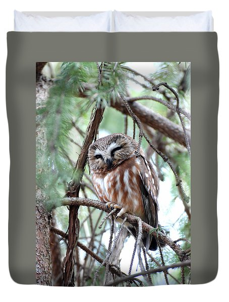 Northern Saw-whet Owl 2 Duvet Cover