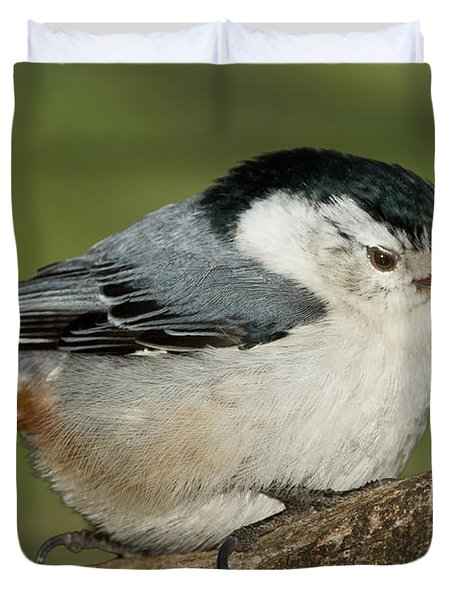 Nuthatch Duvet Cover by Bill Wakeley