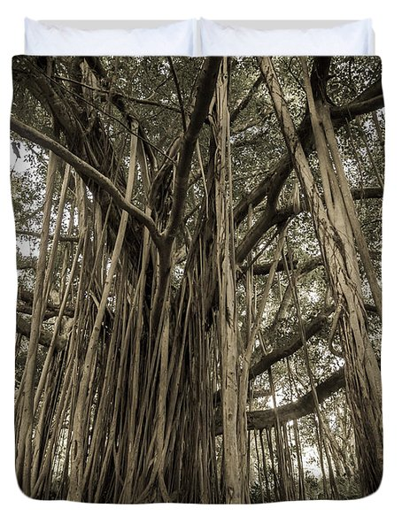 Old Banyan Tree Duvet Cover by Adam Romanowicz