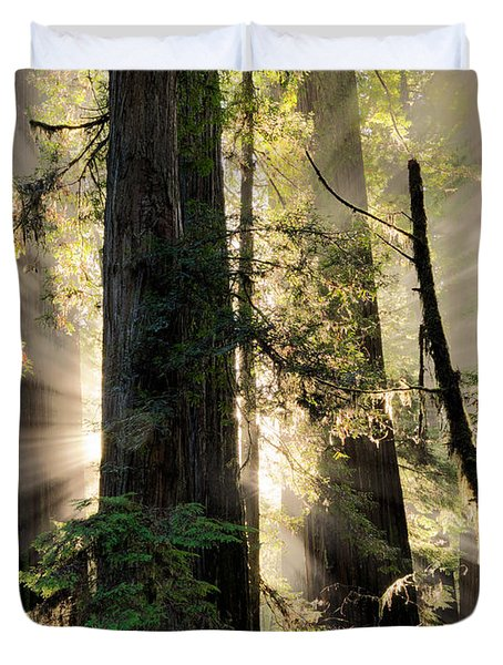 Old Growth Forest Light Duvet Cover