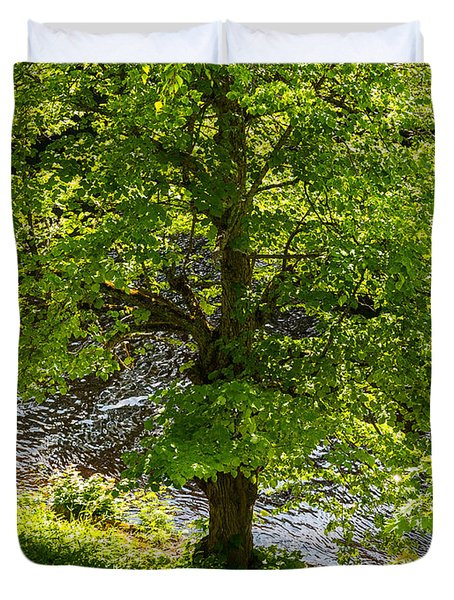 Old Small Leaved Lime At The Riverbank In Oravi Duvet Cover