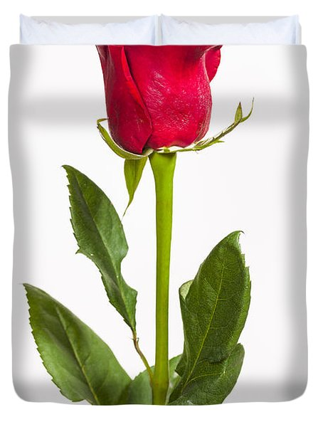 One Red Rose Duvet Cover by Adam Romanowicz