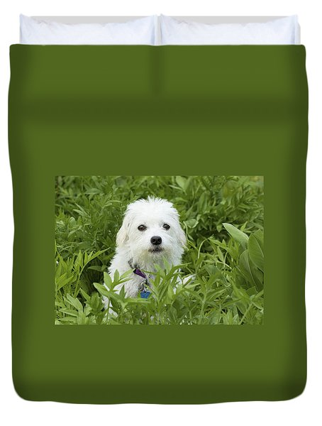 Duvet Cover featuring the photograph Oops Busted - Cute White Dog by Jane Eleanor Nicholas