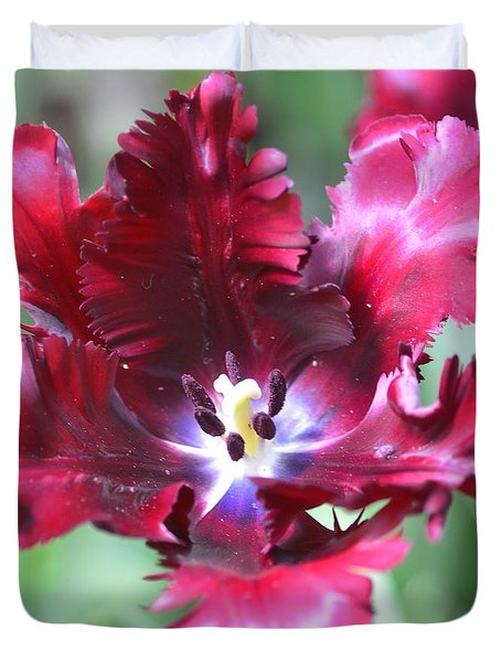 Opened Tulip Duvet Cover by Kathleen Struckle