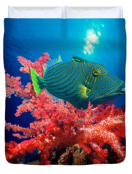 Orange-lined Triggerfish Balistapus Duvet Cover