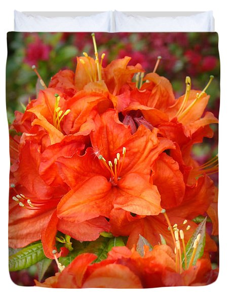 Orange Rhododendron Flowers Art Prints Duvet Cover by Baslee Troutman